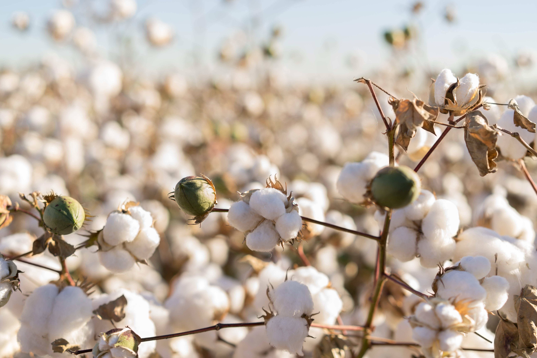 kit berço de puro algodão