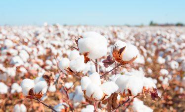 kit berco algodão